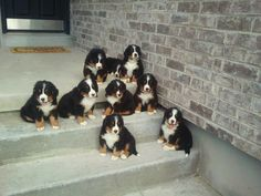 Wouldn't be mad AT ALL if these showed up on my doorstep... :)