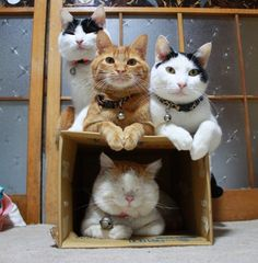 Awwe loook :) - Shiro buddies!