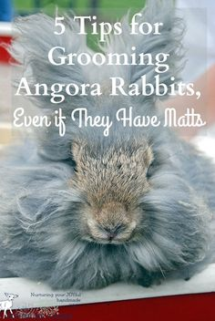 I don't care for the angora breeds, to much work.