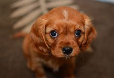 Cute Baby Puppies   ... Life With Pictures Of Cute Kittens And Puppies - Ned Hardy   Ned Hardy