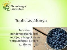 Toplistás áfonya - Terítéken mindennapjaink őrző-védője, a bogyók és az antioxidánsok királya - az áfonya http://www.dr-ehrenberger.hu/toplistas_afonya_az_antioxidansok_kiralya/