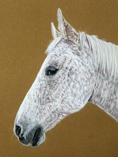 Pferdezeichnungen in Pastellkreide / Horse paintings in soft pastels (24 cm x 32 cm)
