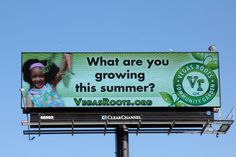 What are you growing this Summer?