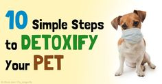 Improving the quality of food, water, and indoor air are just some of the many ways to detoxify your pet's system. http://healthypets.mercola.com/sites/healthypets/archive/2015/05/07/reduce-pet-toxic-loads.aspx