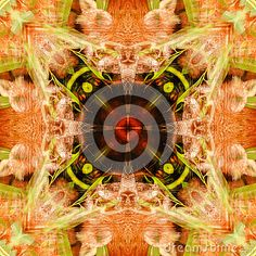 Abstract photo with red panda theme
