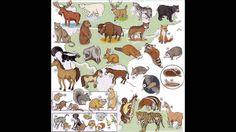 Animals and pets vocabulary list