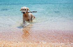 Top 10 Dog Friendly Beaches - Pet360.com