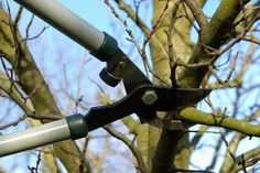 Tree pruning is an essential part of tree care. Find out why tree pruning is important and how to prune properly! Pruning Plum Trees, Trees And Shrubs, Trees To Plant, Ana White, Pruning Tools, Tree Surgeons, Tree Company, Landscape Services, Tree Care
