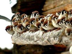 Birds. Nature