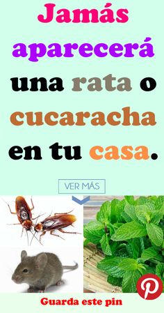 Jamás aparecerá una rata o cucaracha en tu casa. #aparecerá #rata #cucaracha #casa #Bienestar #Remedios #Salud #Consejos #RemediosNaturales