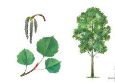 drzewo 3 Autumn Nature, Montessori Materials, Nature Journal, Tree Forest, Elementary Science, Garden Trees, Nature Crafts, Science And Nature, Botany