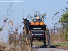AMISH DISCOVERIES: Amish Pumpkin Moment