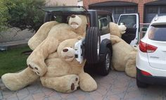 No, you can NOT bring all of your teddy bears.