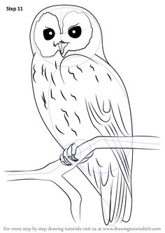 Learn How To Draw A Tawny Owl Owls Step By Drawing Tutorials