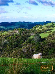 Nieuw-Zeeland is Nie