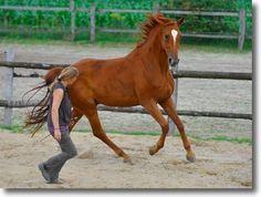 Freiarbeit Archive - Wege zum Pferd