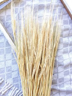 100 Stems Gold Dried Wheat Dried Beardless by greypeonyboutique