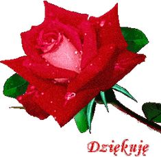 Dziękuję Beard beardo o rourke Happy Birthday Wishes Cards, Rose Images, Beautiful Rose Flowers, Prayer Quotes, Emoticon, Edgy Memes, Red Roses, Motto, Manicure