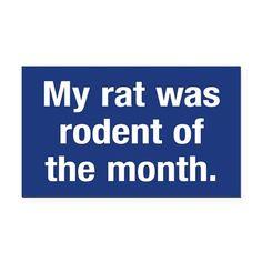 Rat of the Month Rectangle Car Magnet on CafePress.com