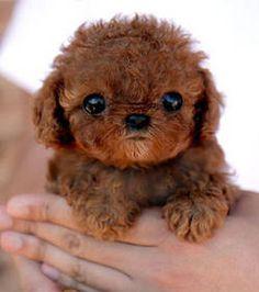 Résultats Google Recherche d'images correspondant à http://img.gentside.com/animal/un-adorable-bebe-chien_126422_w250.jpg