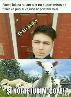 Funny Pictures, Funny Pics, Haha, Humor, Comics, Memes, Animals, Beautiful, Internet