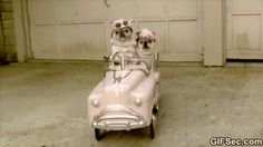 GIF Dogs taking a ride