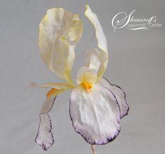 Iris mania - Cake by Petya Shmarova