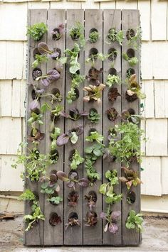 cool way to grow a salad garden