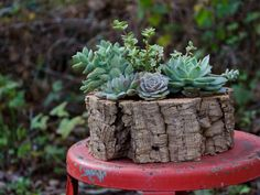studio choo valentine s day shop succulent planter
