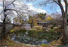 Namganjeongsa in Spring Daejeon, Korea Korean Peninsula, Daejeon, Buddhist Temple, Fishing Villages, Travel Bugs, North Korea, Countryside, Woods, Coastal