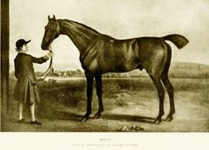 Herod (originally King Herod; April 1758 – 12 May 1780) was a Thoroughbred racehorse. He was one of the three foundation sires of the modern Thoroughbred racehorse, along with Matchem and Eclipse. Herod was the foundation sire responsible for keeping the Byerley Turk sire-line alive. Herod sired the winners of 497 races worth ₤201,505.[4]  He was still covering mares until his death, at age 22, at Netherhall (written as Neather Hall in the old calendars) on 12 May 1780.