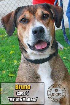 ***URGENT! - 11/1/16 ~ 06 Bruno Dog • Shepherd Mix • Young • Male • Large Stark County Dog Warden Department Canton, OH