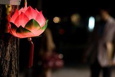 Lotus lantern from Korea