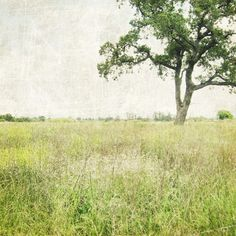 Stay a while - Tree Photography - Oak Tree Summer meadow - pale olive green wall art print - rustic decor tree photograph 10x10.