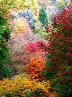 A riot of colour at Winkworth Arboretum in Godalming, Surrey  Picture: Geoffrey Swaine / Rex Features via Telegraph :)