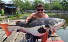 _________ Redtail Catfish ________
