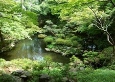 Where to view cherry blossoms, enjoy a summer picnic, admire the fall leaves or stroll through the winter greenery. The 20 top picks of Tokyo Japanese gardens, whenever you visit! Tropical Greenhouses, Tokyo Travel Guide, Shinjuku Gyoen, Temple Gardens, Tokyo Dome, Cherry Blossom Season, Small Waterfall, Imperial Palace, Spring Nature