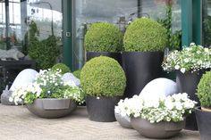 Mooie buxus bollen om je terras op te fleuren