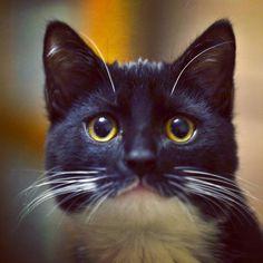 #kot #kotek #koty #cat #cats #little #kitty #kitten #kittycat #littleballoffur #vsco #eyeem #eyes #ears #whiskers #catwhiskers #furry #beautiful #stunning #pet #pets #petsagram #petsofinstagram #catsofinstagram #black #white #animals #bokeh by pietja_