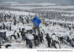 Outside in the cold with penguins   Amazingly Timed Photos