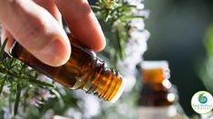 4 Best Essential Oils for Nerve Pain (Neuralgia and Neuropathy)! Essential Oil For Swelling, Essential Oils For Ringworm, Antibacterial Essential Oils, Essential Oils For Pain, Frankincense Essential Oil, Tea Tree Essential Oil, Organic Essential Oils, Essential Oil Uses, Oil Benefits