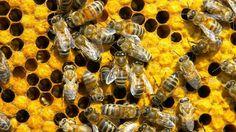 Наша жизнь принадлежит Пчёлам