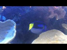 Awesome Fish Fish, Pets, Awesome, Youtube, Movies, Animals, Animales, Animaux, Films