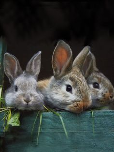 Baby bunnies in a box Animals And Pets, Baby Animals, Cute Animals, Wild Animals, Beautiful Creatures, Animals Beautiful, Animal Pictures, Cute Pictures, The Magic Faraway Tree