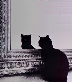 micia allo specchio