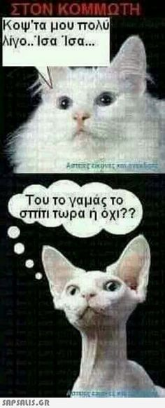 αστειες εικονες με ατακες Funny Status Quotes, Funny Greek Quotes, Funny Statuses, Funny Qoutes, Happy Animals, Funny Animals, Funny Images, Funny Photos, Laughing Animals