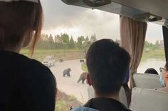 Zelador de zoológico é atacado por ursos em frente a turistas, que filmam a cena - GreenMe Brasil