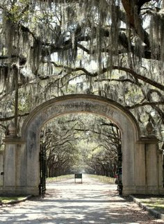Movie sites from The Last Song - Wormsloe entrance gate - Savannah.   Talk of the House
