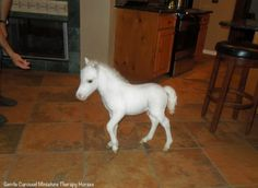 """""""Can you believe Little Prince is already six months old!""""  -Gentle Carousel Miniature Therapy Horses -"""
