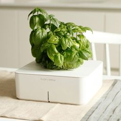 The smart flowerpot does not need any extra care, fertilizing or watering. To grow a plant using the Click & Grow Smartpot, a user simply has to purchase the Starter Kit which includes a seed herb cartridge, instructions, a germination lens, seeds and a pot, add fresh water to the planter, add the seed and nutrient cartridge and place the planter near a window, on the balcony, a place with plenty of natural daylight or even a place that is well illuminated.
